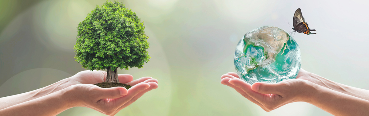 Sustainabili...
